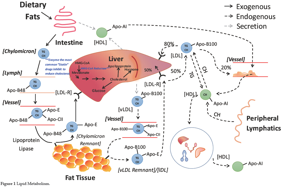 the role of pcsk9 in lipid metabolism: clinical relevance to treating  cardiac disease | han | journal of cardiology and therapy
