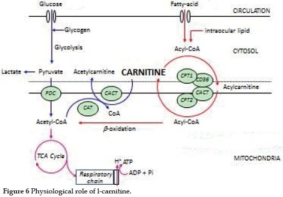 Brain Carnitine Deficiency Causes >> Re Evaluation Of L Carnitine In Chronic Hemodialysis Kudoh