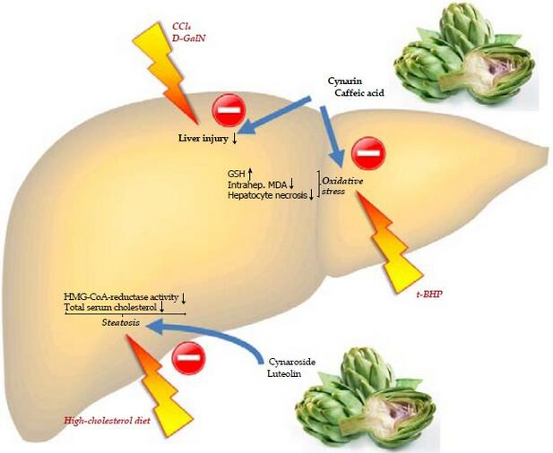 Journal of Gastroenterology and Hepatology Research