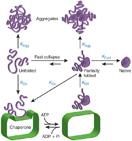 Molecular biology research papers